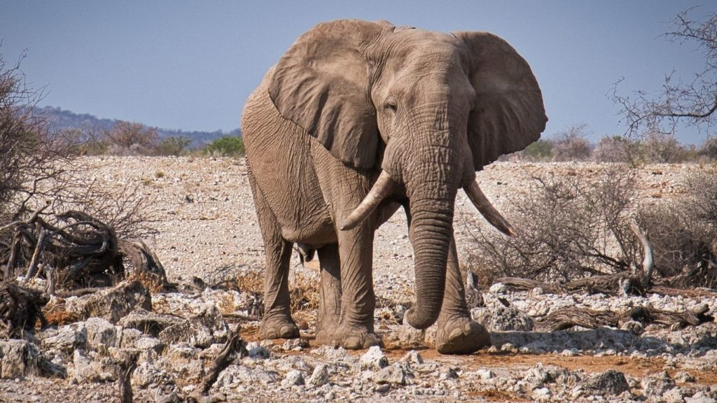 Endangered elephants in Namibia now have water thanks to our supporters