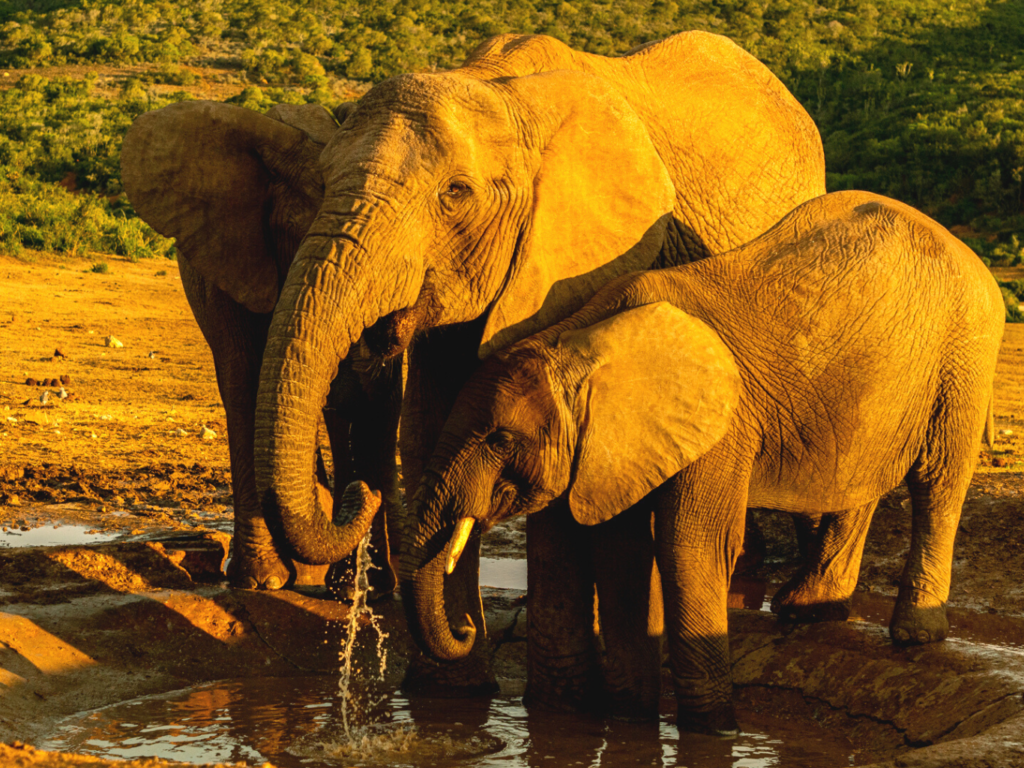Addo Drought Still Raging! Here's How We're Helping.