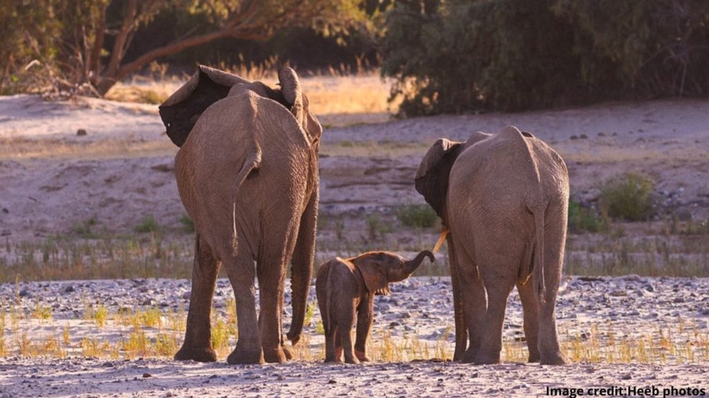 We've struck water, but it's not a home run – yet! Namibia's elephants are STILL AT RISK!
