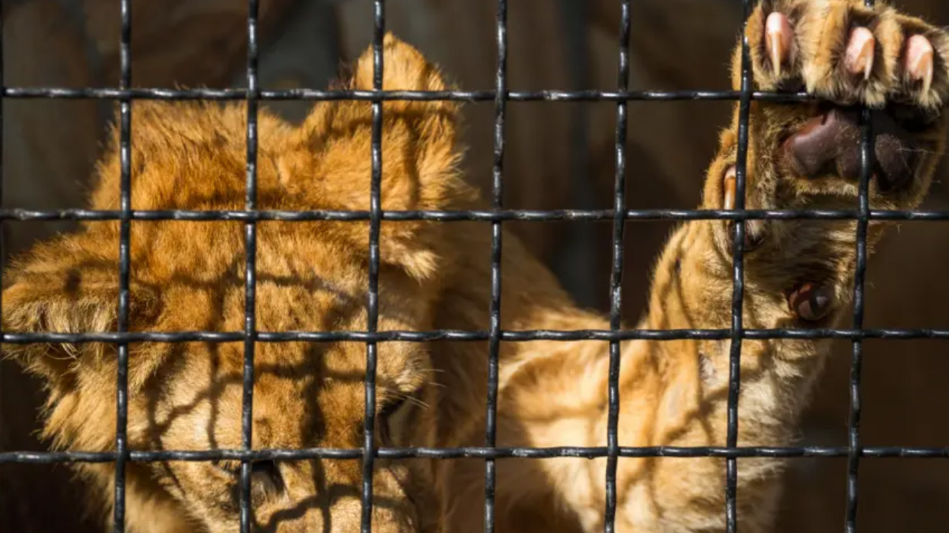 It is not too late to SAVE ANIMALS FROM EXTINCTION! But we URGENTLY need your help now!