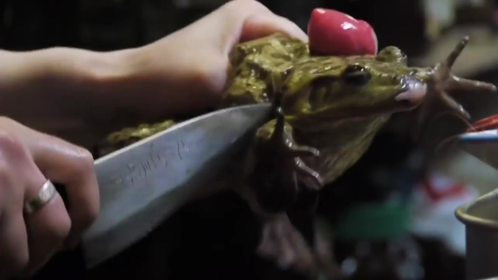 EATEN TO EXTINCTION! Millions of frogs are being tortured, maimed and killed - for the dinner table!