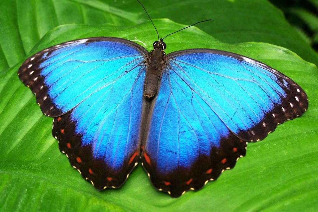 Butterfly Numbers in Britain Plunge With Lowest UK Figures Recorded in 10 Years
