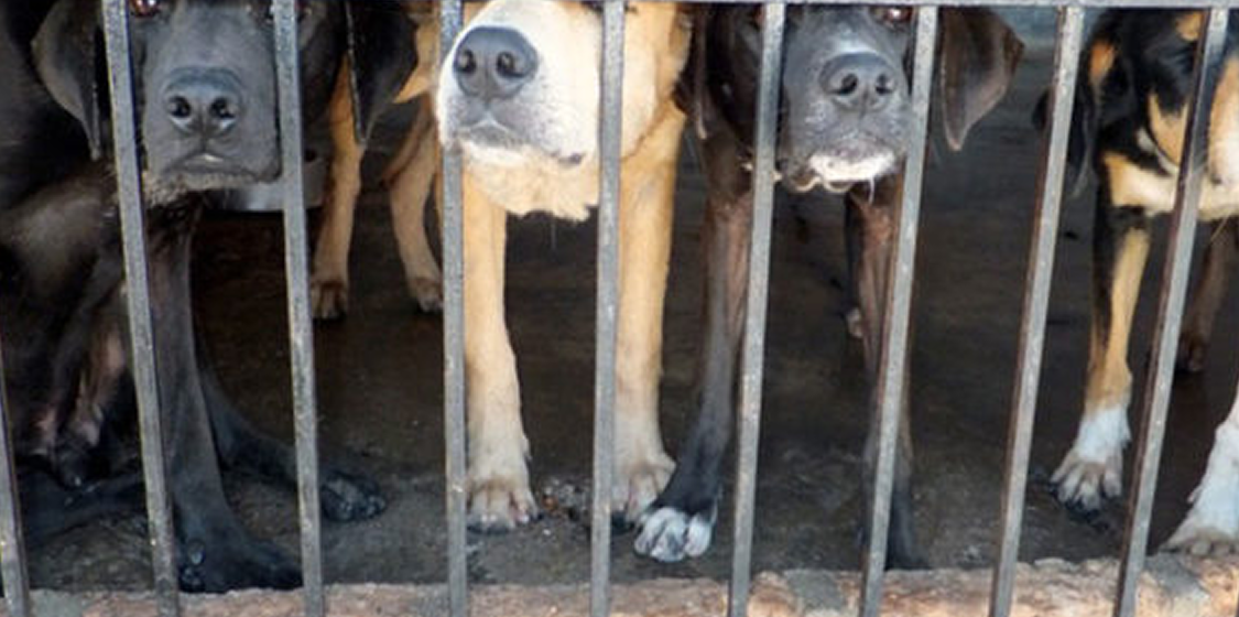 Dog Meat Laws
