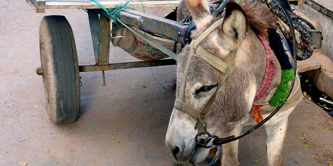 Donkey Cart India