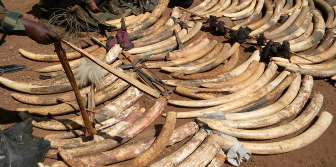 Ivory Sales