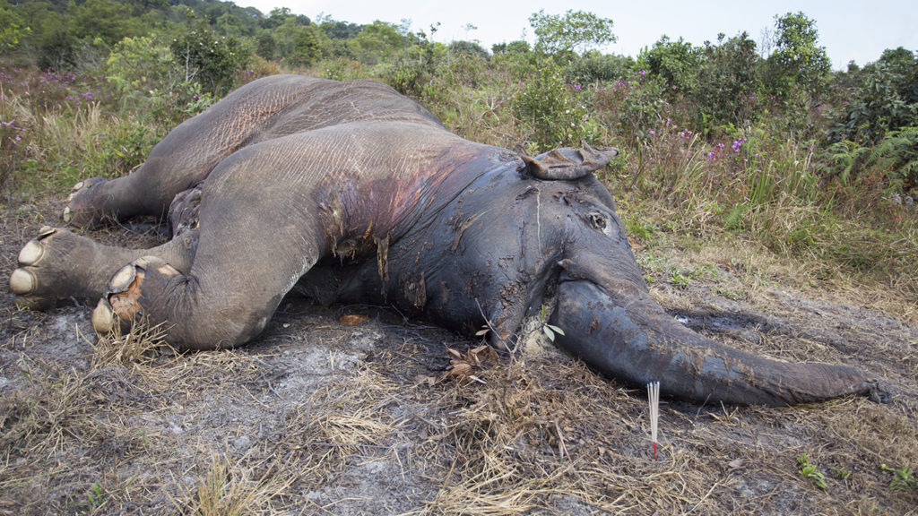 Botswana Elephants Drop Like Flies in a Mysterious Mass Die-Off, Yet Government Drags Its Heels