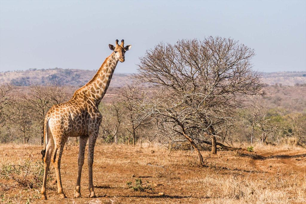 South African Wildlife Under Government Assault, Humans Under Threat