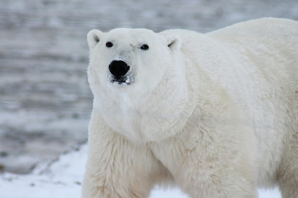 Animal Populations Crash as Our Planet Becomes a Playground for Human Destruction