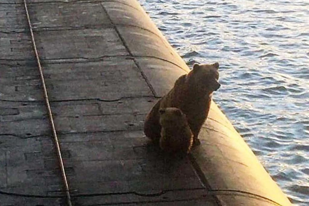 Mamma Bear and Her Cub's Tragic Final Moments Before Being Shot Dead