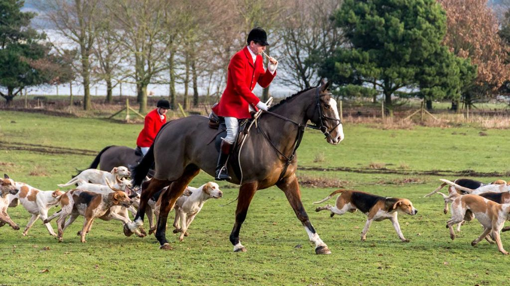 Shocking Evidence Reveals Hunting Fraternity Flouting the UK's Hunting Ban