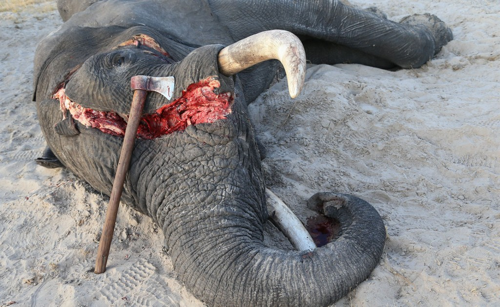 UK plans to ban ivory trade to end 'shame' of elephant poaching