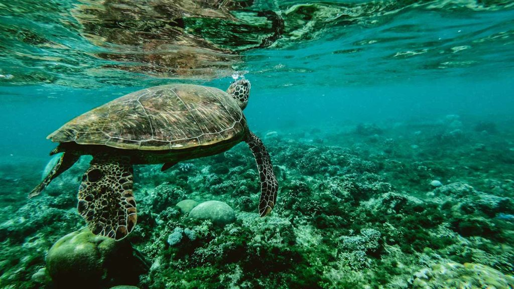 There Is a Way to Help Save Marine Life. Stop All the Noise!