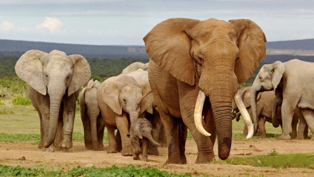 Namibia's Wild Elephants Destined for Foreign Zoos, Say Lobby Groups