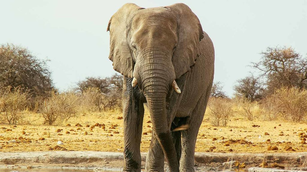 Namibia Confirms Its Wild Elephants Are up for Sale - Despite Massive Outcry
