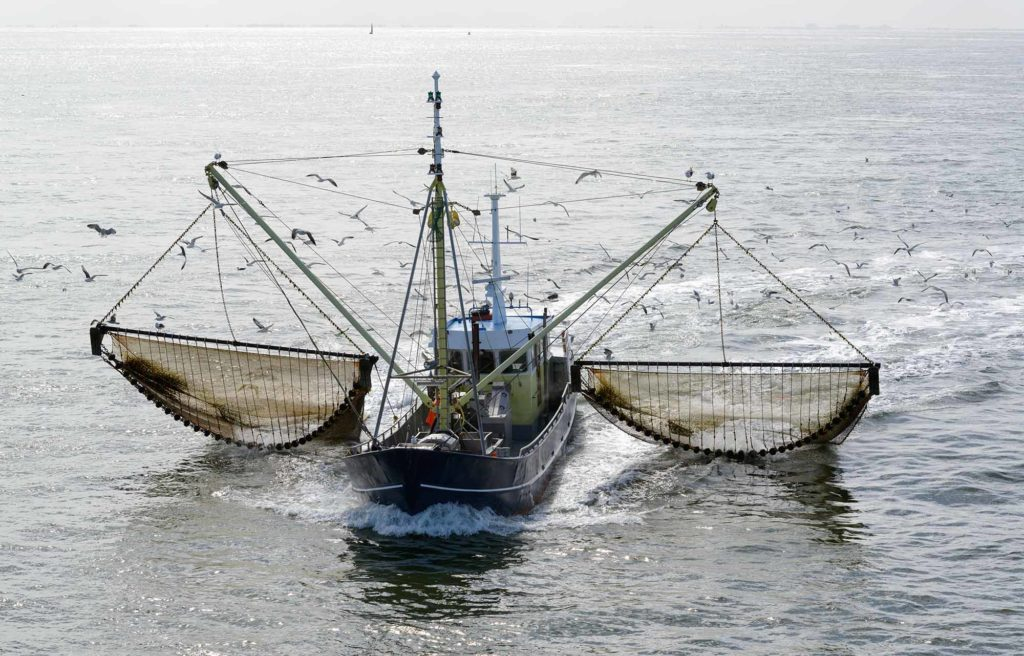 ASI Calls on China To Protect the Bounty of Our Oceans or Nations Will Flounder