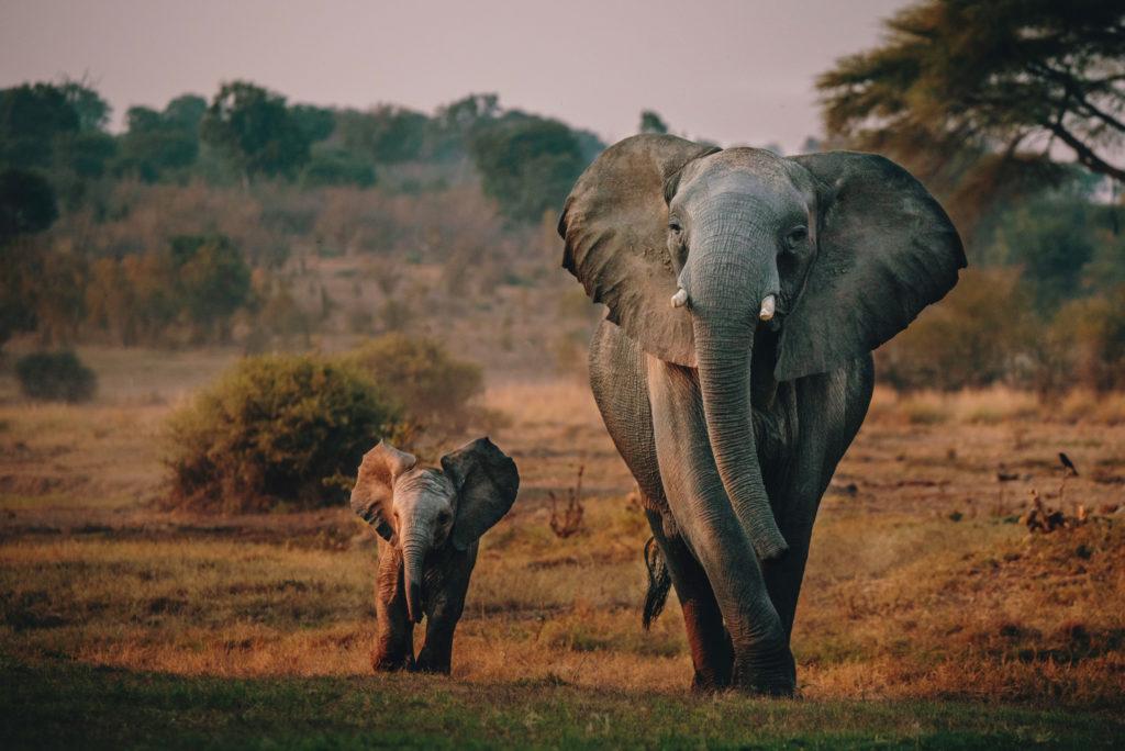 Nearly 300 Elephants to Be Shot as Botswana Opens Its Hunting Season