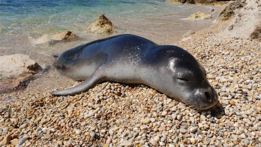 Endangered Mediterranean monk seals' last haven UNDER THREAT!