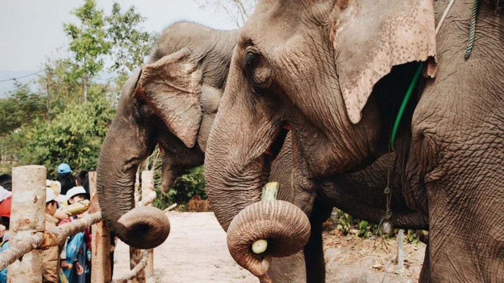 UK Announces Plan to Ban the Keeping of Captive Elephants