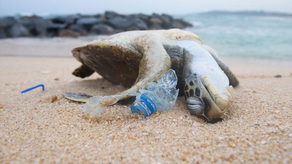 Discarded plastic is killing turtles, including BABIES!