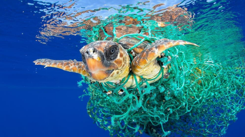 They ATE PLASTIC GARBAGE - now, 47 baby turtles are in LIFE-OR-DEATH struggle!