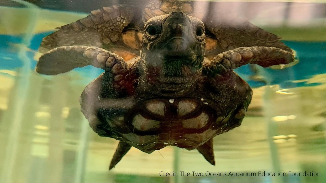 LIFE or DEATH struggle for 47 endangered sea turtle BABIES who ate plastic they thought was food!