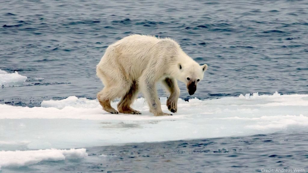 Climate Change-Induced Conflict With Animals Is Now Our Most Important Challenge