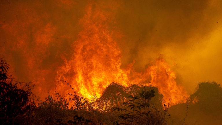 Millions of rare and endangered animals, including jaguars and giant anteaters, are caught in a RAGING INFERNO!