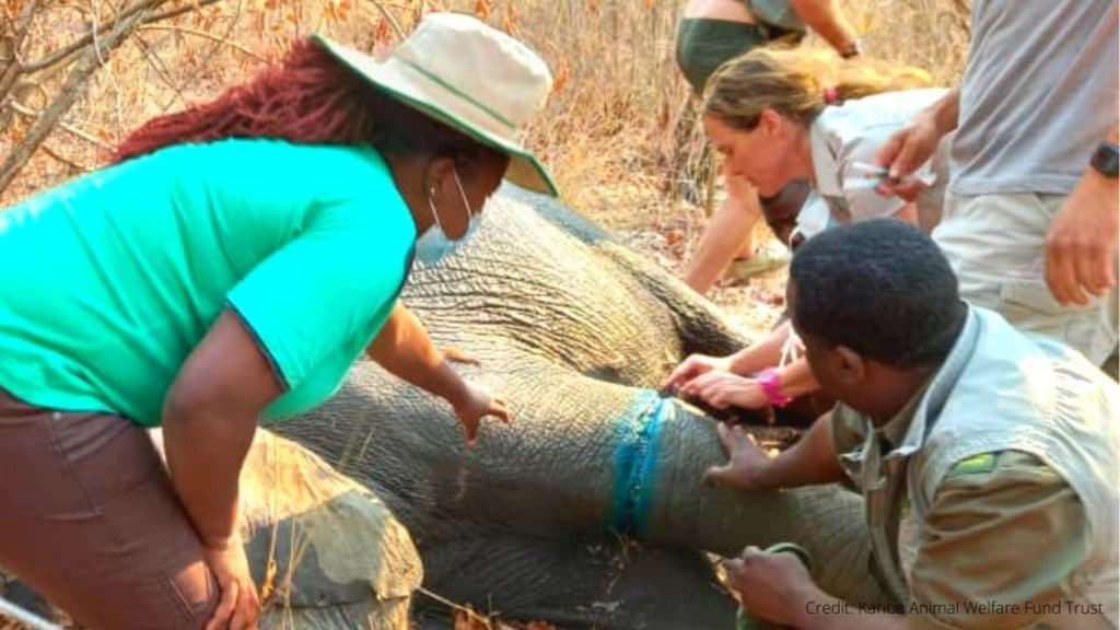 We Did It! The Baby Elephant Rescue Operation Was a Success!