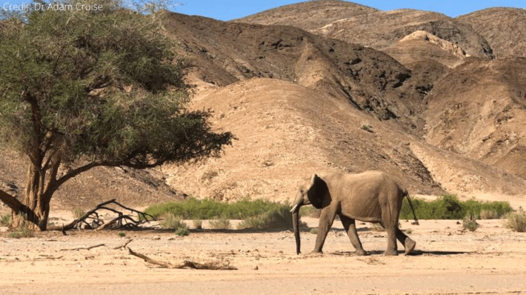 International Body Tasked With Protecting Endangered Species Shamefully Allows Namibia to Export Wild Elephants