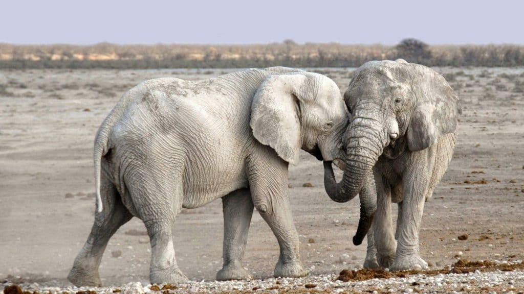 Elephant Appreciation Day